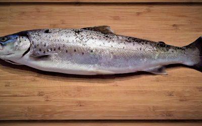 Los beneficios de consumir pescado y mariscos son múltiples
