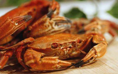 Otoño, la mejor época del año para comer marisco